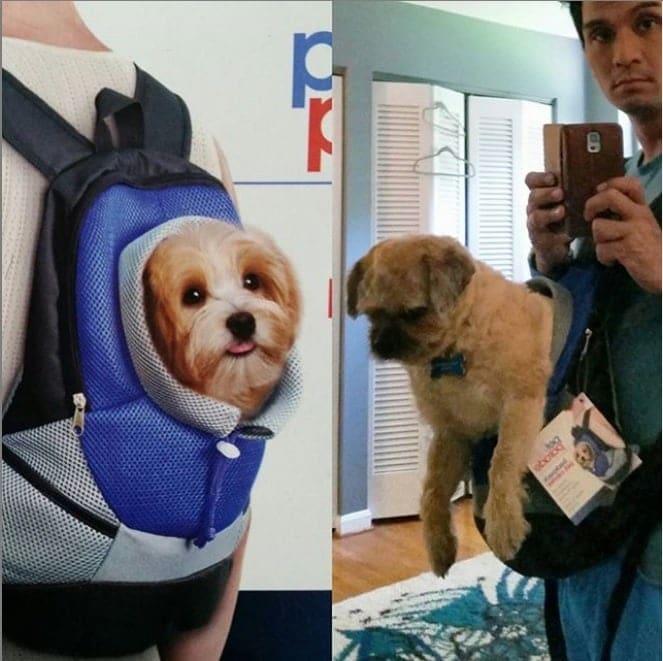 un sac à dos pour chien