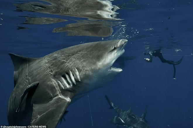 le requin photographié par John Moore