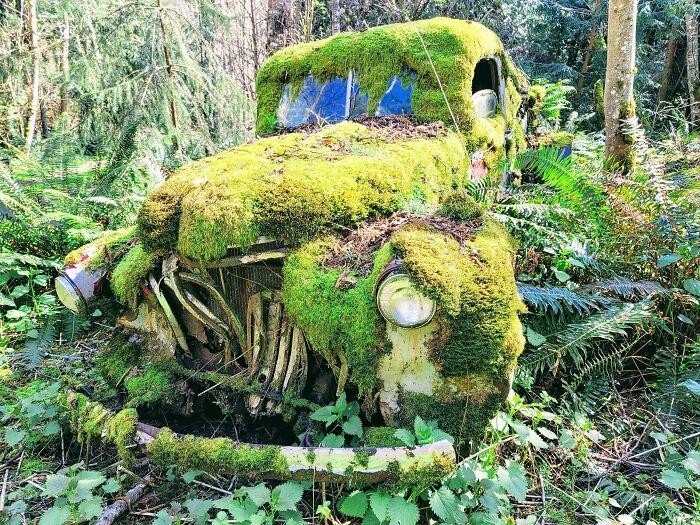une vieille voiture couverte de mousse