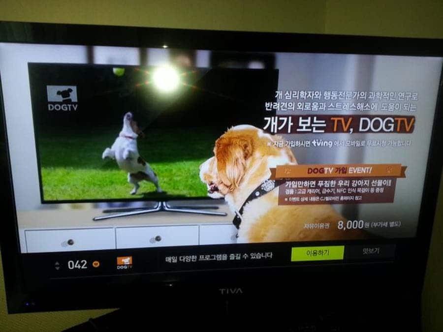 une chaîne TV pour chiens