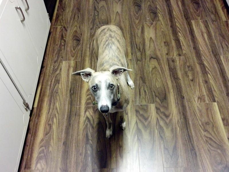 un chien assorti au sol