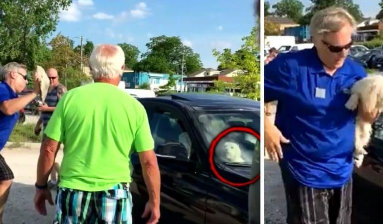 Il brise la vitre d'une BMW pour sauver un chien enfermé en plein soleil et risque des poursuites (vidéo)