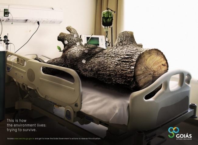 une pub contre la déforestation