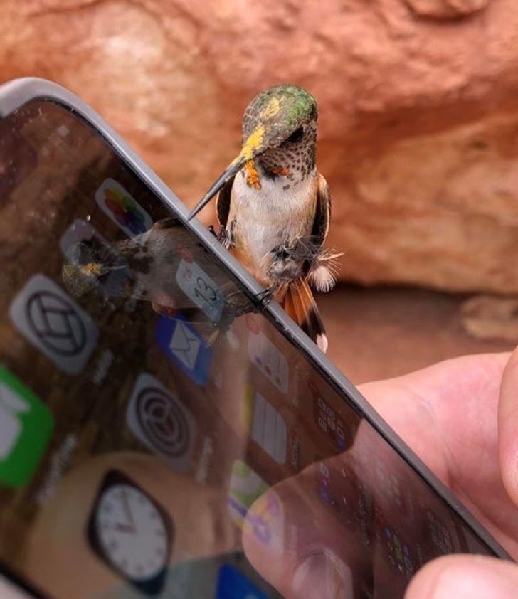 oiseau-colibri-smartphone