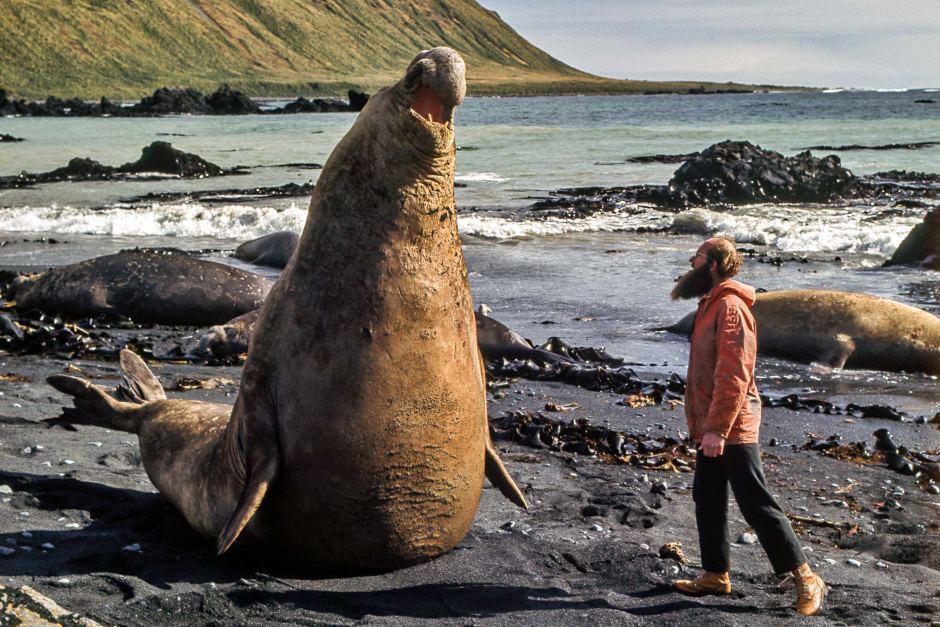 choses-éléphants-de-mer