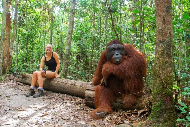 Choses-singe-orang-outan