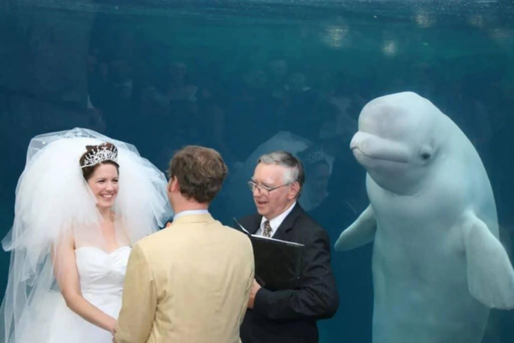 photobombes de mariage