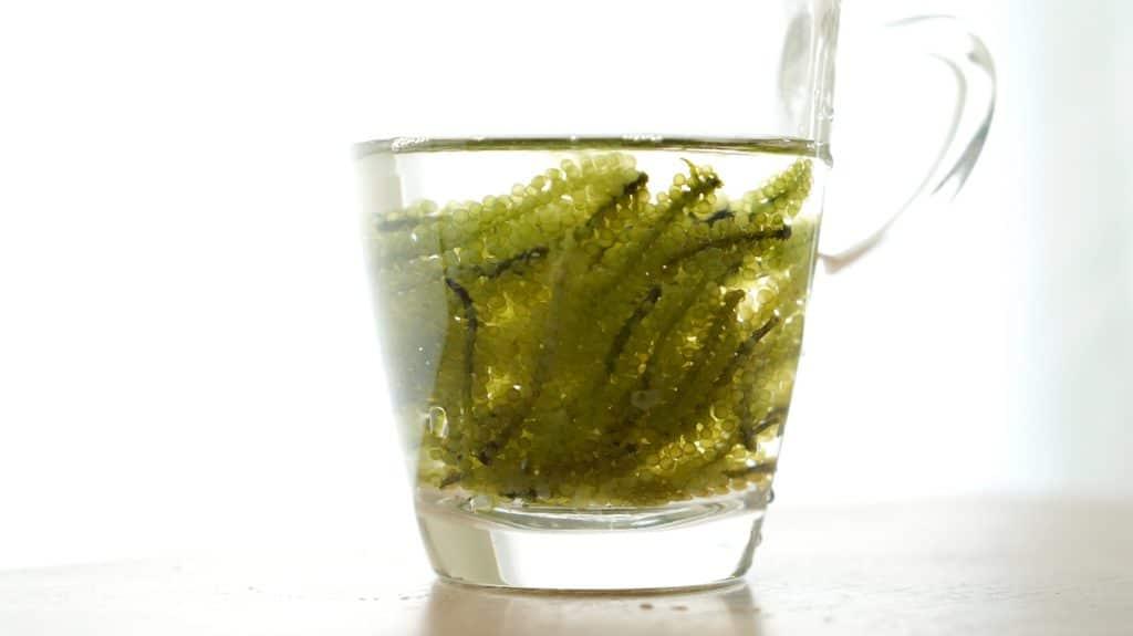 Caviar vert ou raisin de mer