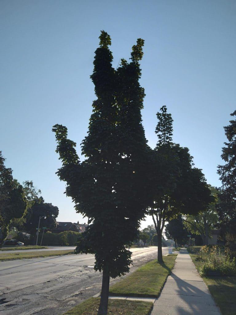 Un arbre ressemblant à une personne à l'envers